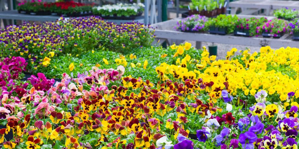 garden hellenic-land.com
