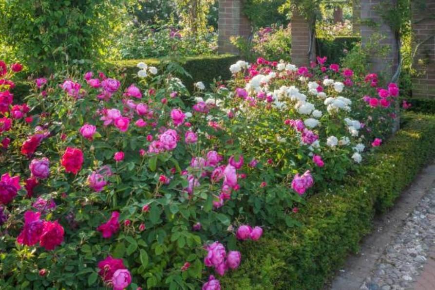 garden trends -hellenic-land.com